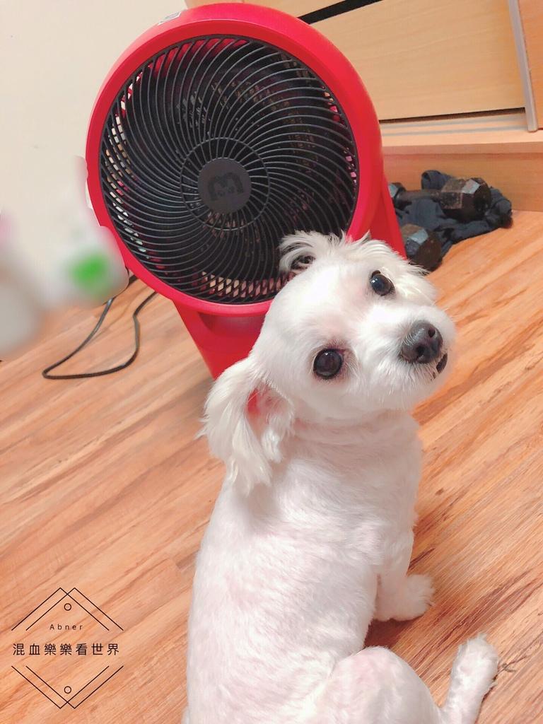 一年四季都好用的高CP多功能扇 Bmxmao MAO Sunny冷暖循環扇 智慧控溫 快速循環冷房更快!